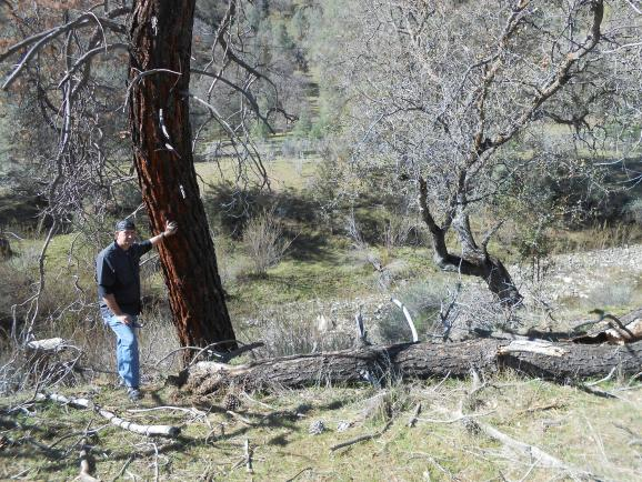 Coalinga resident Larry Haws stands at the site where the DC-3 crashed in Los Gatos Canyon